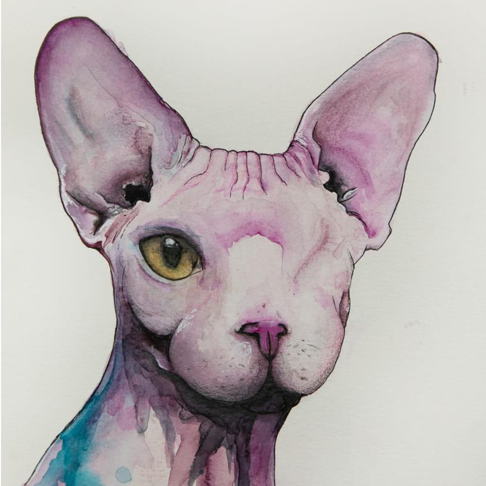 Animal Portraits
